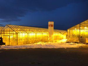 Cucumber farm Iceland
